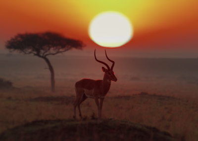 MAWINDO. THE DRAMA OF THE SERENGETI