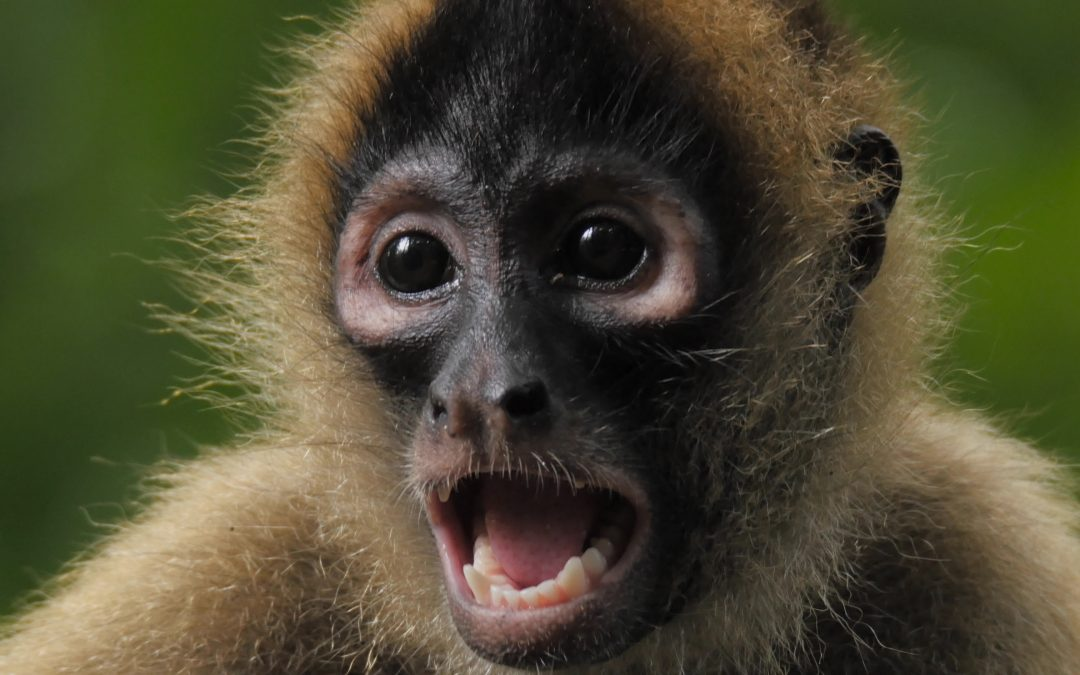 MONKEYS AND MORE. OUR CLOSEST RELATIVES